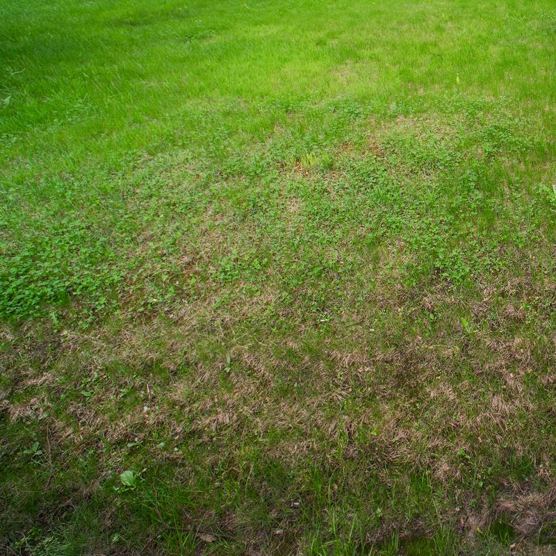 Få hjælp til en velplejet græsplæne